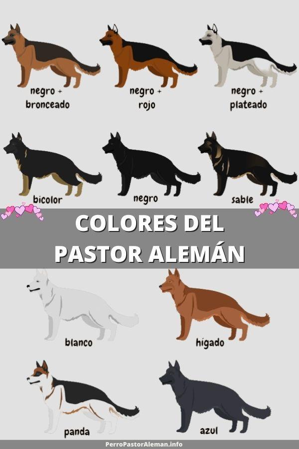 tipos de pastor alemán COLORES del pastor alemán