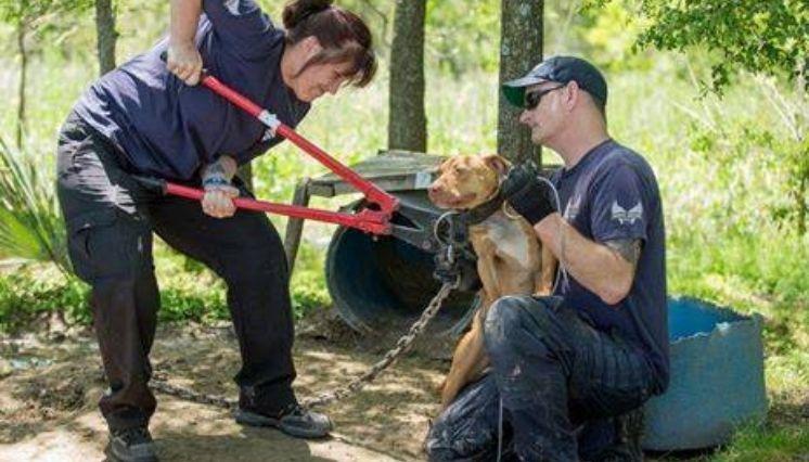 10 Increibles Fotos De Perros Al Ser Rescatados 2