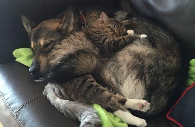 Adoptan Perro Y Vuelven Al Refugio Para Conseguirle Un Hermano Pequeño 6