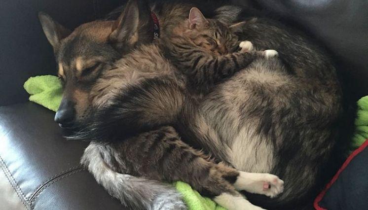 Adoptan Perro Y Vuelven Al Refugio