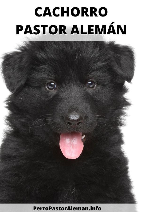 5 12 Cachorro Pastor Alemán Negro