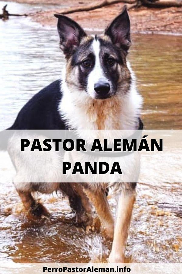 46 Perro Pastor Alemán Panda