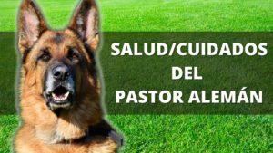 Salud Del Pastor Alemán